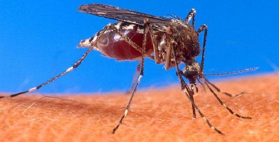 gene_malaria